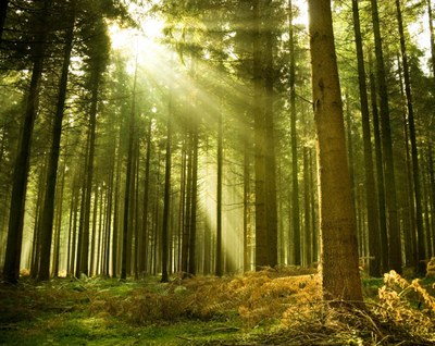 Intranet solutions parallax forest